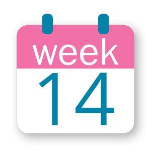 Εβδομάδα κύησης 14η