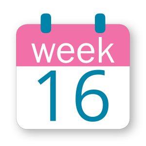 Εβδομάδα κύησης 16η