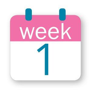 Εβδομάδα κύησης 1η