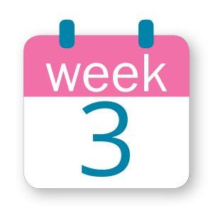 Εβδομάδα κύησης 3η