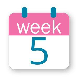 Εβδομάδα κύησης 5η
