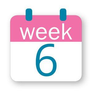 Εβδομάδα κύησης 6η