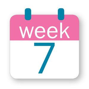 Εβδομάδα κύησης 7η