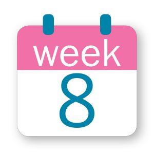 Εβδομάδα κύησης 8η